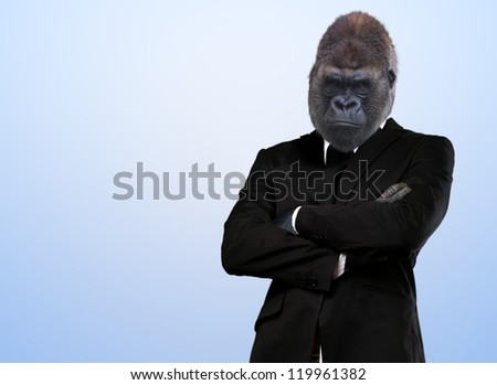 Serious Gorilla In Suit On Blue Background - stock photo