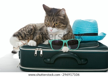 Serious grey cat sitting on a green suitcase, isolated on white - stock photo