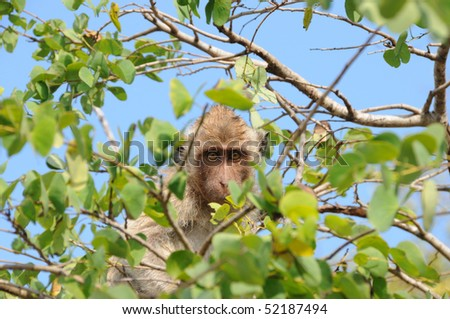 serious monkey on the tree - stock photo