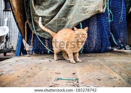 Serious street cat looking at camera. - stock photo