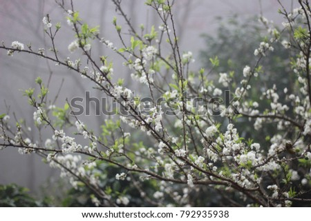 Serpent flower white plum blossom stock photo royalty free serpent flower white plum blossom mightylinksfo