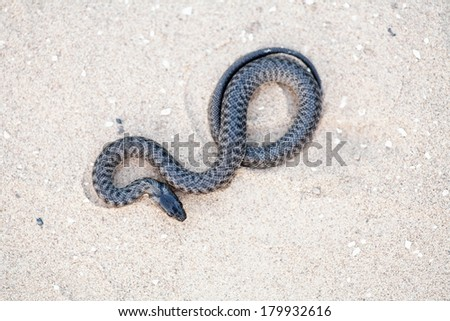 Serpent on sand from above - stock photo