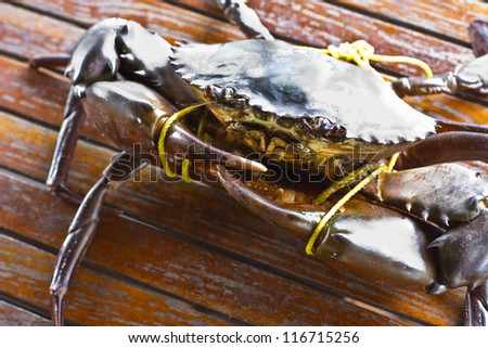 Serrated mud crab in Kood island - stock photo