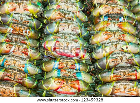 Serrated mud crab (Scylla serrata) tied and row display for sale in street market of Thailand