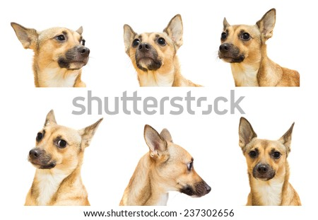 set  a dog  head on a white background isolated