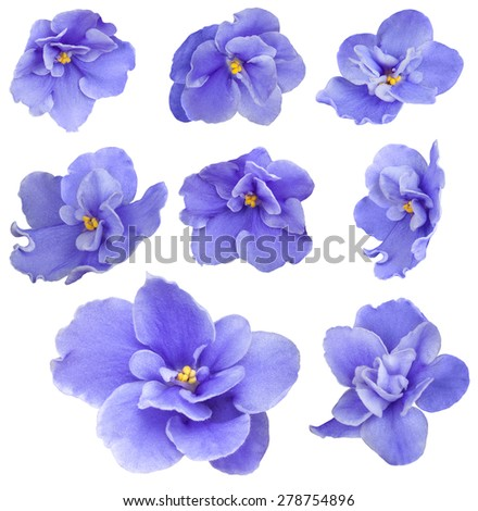 Set collection of fresh beautiful violet flowers isolated on white - stock photo