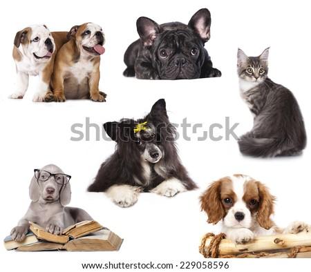 set Dog - stock photo