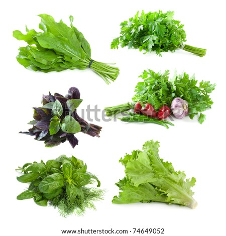 set: fresh herbs, isolated on white background - stock photo