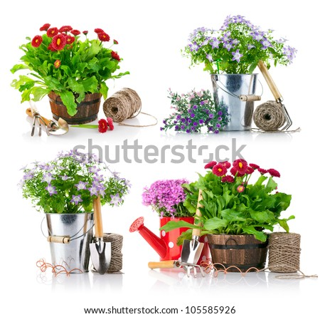 set garden flowers with tools isolated on white background - stock photo