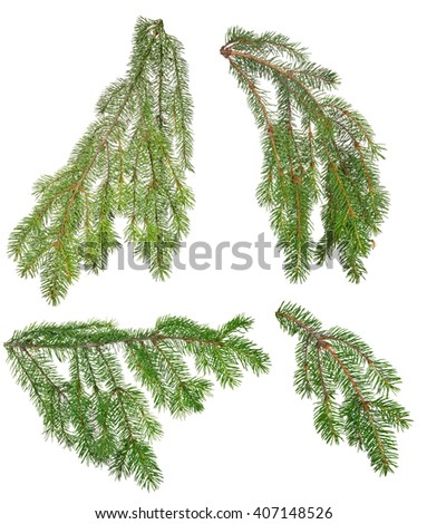 set green fir branches isolated on white background - stock photo