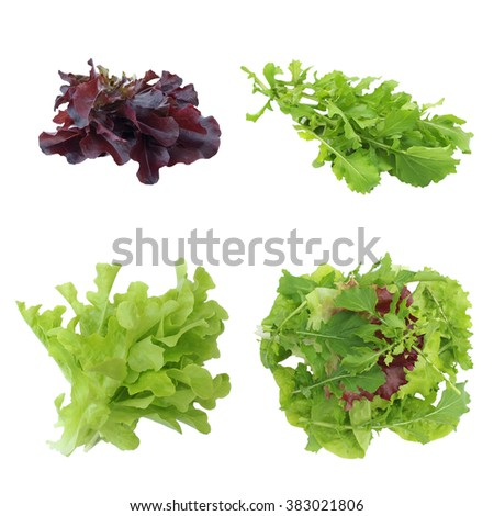 Set green, violet lettuce and rucola isolated on white background - stock photo
