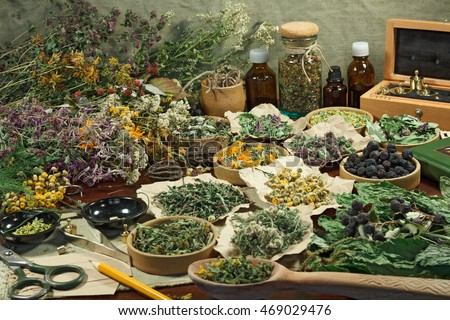 Set healing herbs. Dried herbs for use in alternative medicine.Herbal medicine, phytotherapy medicinal herbs.For preparation of infusions, decoctions, tinctures, powders, ointments, tea.