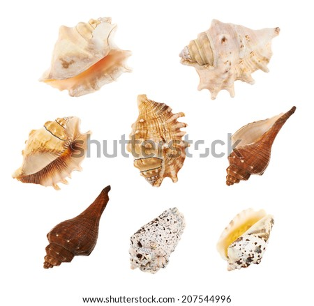 Set of a multiple sea shells, isolated over the white background - stock photo