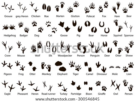 set animal bird trails name stock illustration 300546845 shutterstock