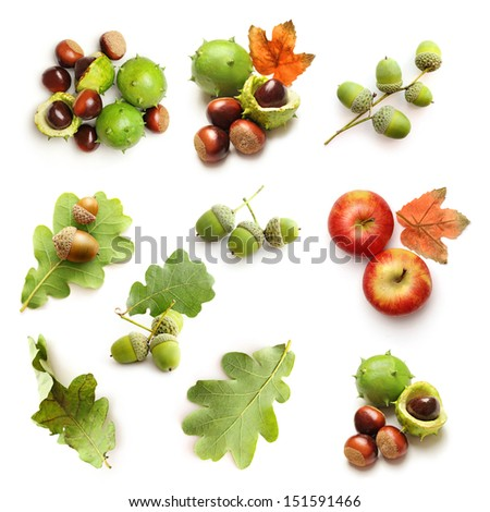 Set of autumnal nature elements - stock photo
