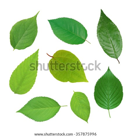 Set of beautiful green spring leaves isolated on white - stock photo