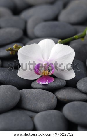 Set of beautiful orchid on pebbles