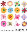 Set of beauty flower papers - stock photo