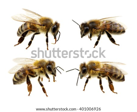 Set of bee isolated on the white