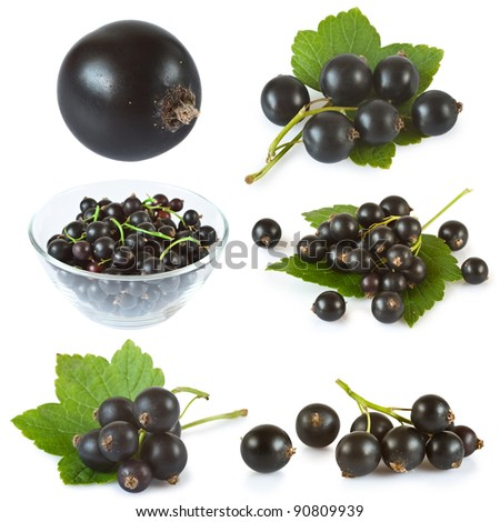 set of black currant with green leaves isolated over white background