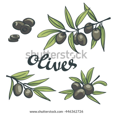 Set of black olives. Isolated objects.
