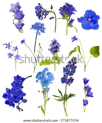 set of blue flowers isolated on white background - stock photo