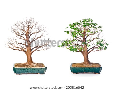 Set of bonsai trees in flowerpots on white background