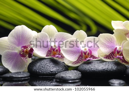 Set of branch orchid with stones- palm leaf background - stock photo