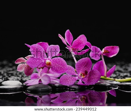 Set of branch pink orchid with therapy stones  - stock photo