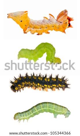 set of caterpillars isolated on white background - stock photo