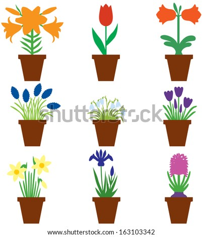Set of color images of bulbs flower in pots