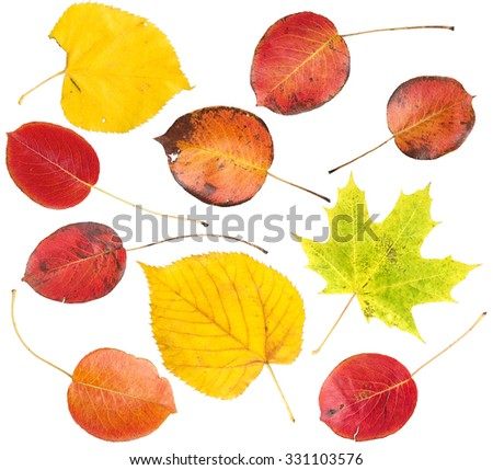 Set of colorful autumn leaves isolated on a white background - stock photo
