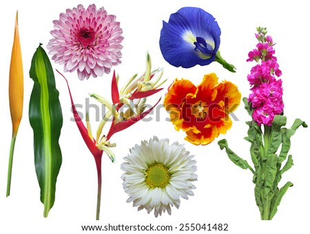 Set of colorful flowers and leaf isolated on white background - stock photo