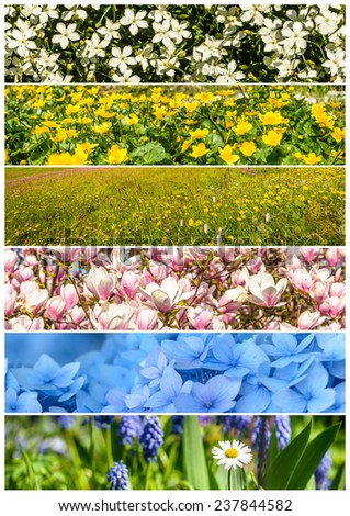 Set of colorful flowers banner or header . - stock photo