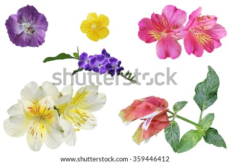 Set of colorful tropical flower isolated on white background - stock photo