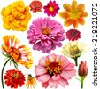 set of colorful zinnia, dahlia and marigold  flowers - stock photo
