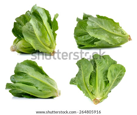 set of Cos Lettuce on White Background