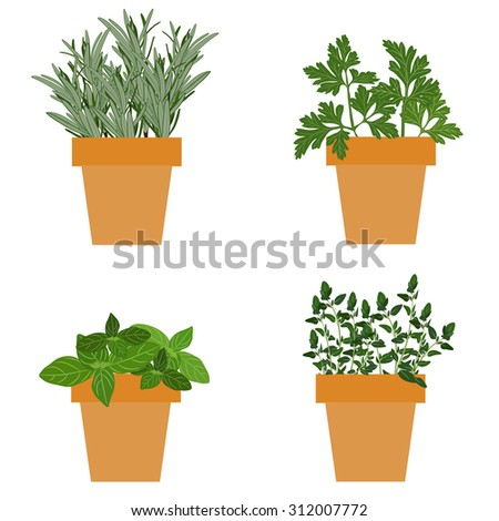 Set of culinary herbs in pots with fresh thyme basil, rosemary and parsley. Grow The Garden - stock photo