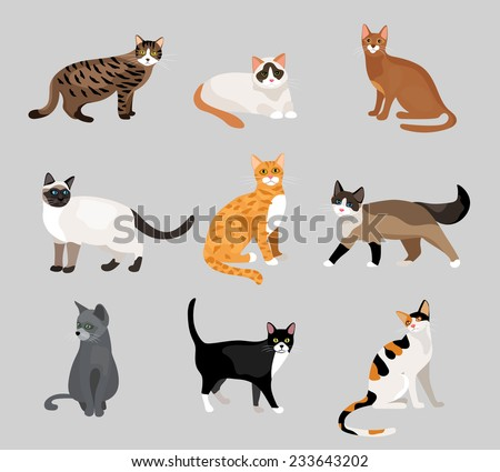 Set of cute cartoon kitties or cats with different colored fur and markings standing  sitting or walking  illustrations on grey - stock photo