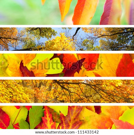 Set of 5 Different Autumn's Banners / Nature Backgrounds - stock photo
