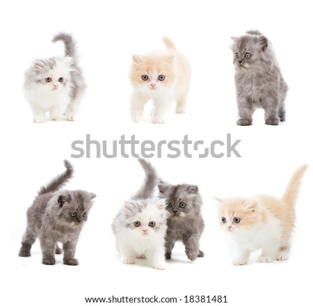 Set of different kittens on isolated white background - stock photo