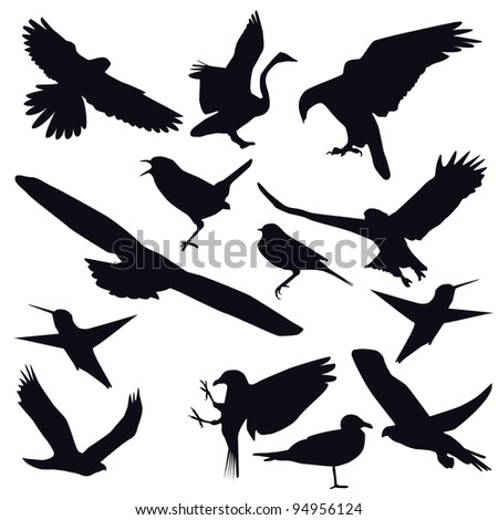 Set of different photographs of birds isolated on white background. Raster version. - stock photo