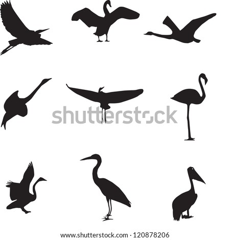 Set of different photographs of birds seamless pattern. Raster version.