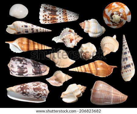 Set of different sea shells - stock photo