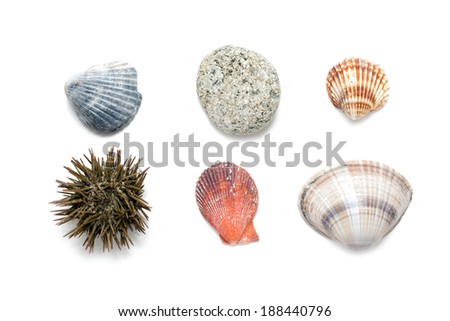 Set of different sea shells from Greece on white background  - stock photo