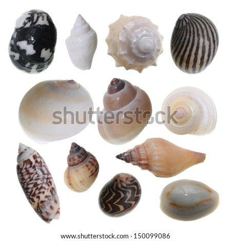 Set of different sea shells isolated on white - stock photo