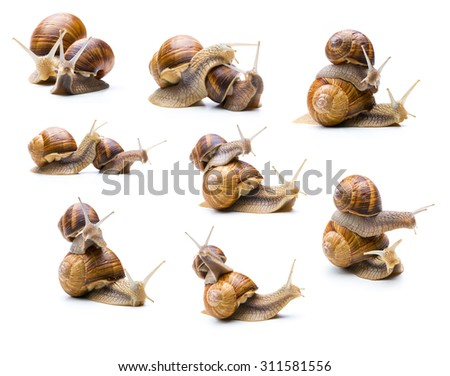 set of different snails piggybacking isolated on white background - stock photo