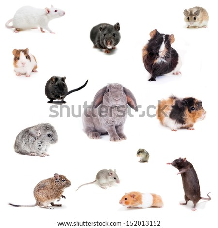 Set of Different spieces of rodents, isolated on white - stock photo