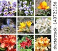 Set of different spring flowers - stock photo