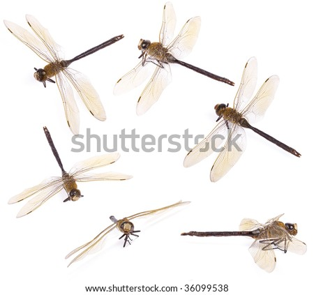 Set of dragonfly isolated on white - stock photo